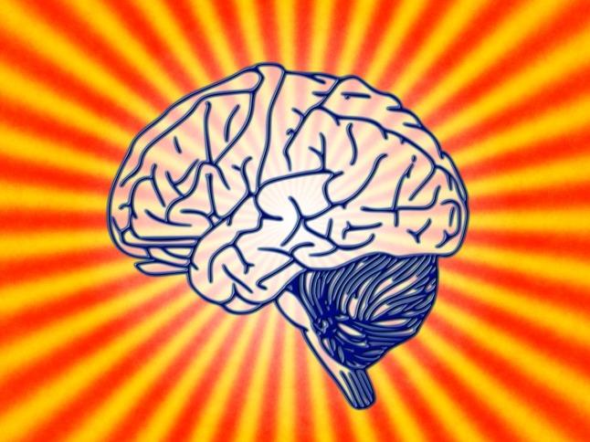 brain-78440