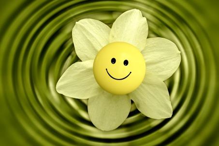 flower-233838