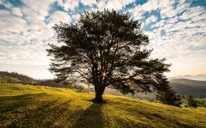 tree-338211
